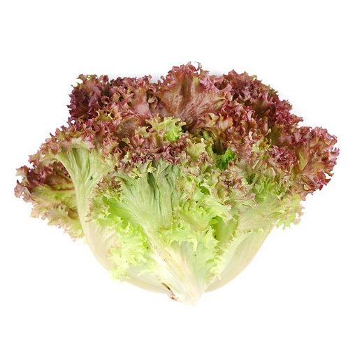 Red Leaf Lettuce, Organic