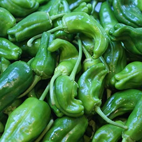 Padron Peppers, Organic