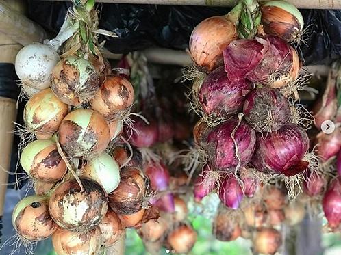 Onions, Organic