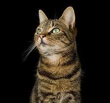 Cats-Culture-691050541_edited.jpg