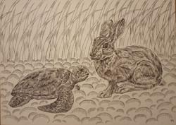 №352_Заяц и черепаха