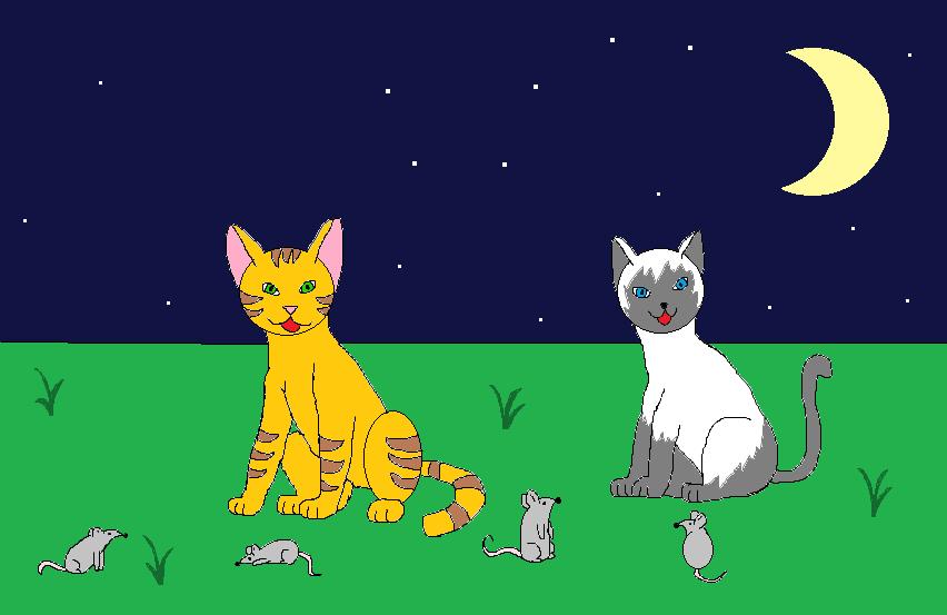 №16_Кошки
