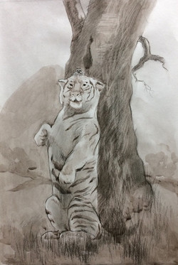 №181_Как лягушка тигра обманула