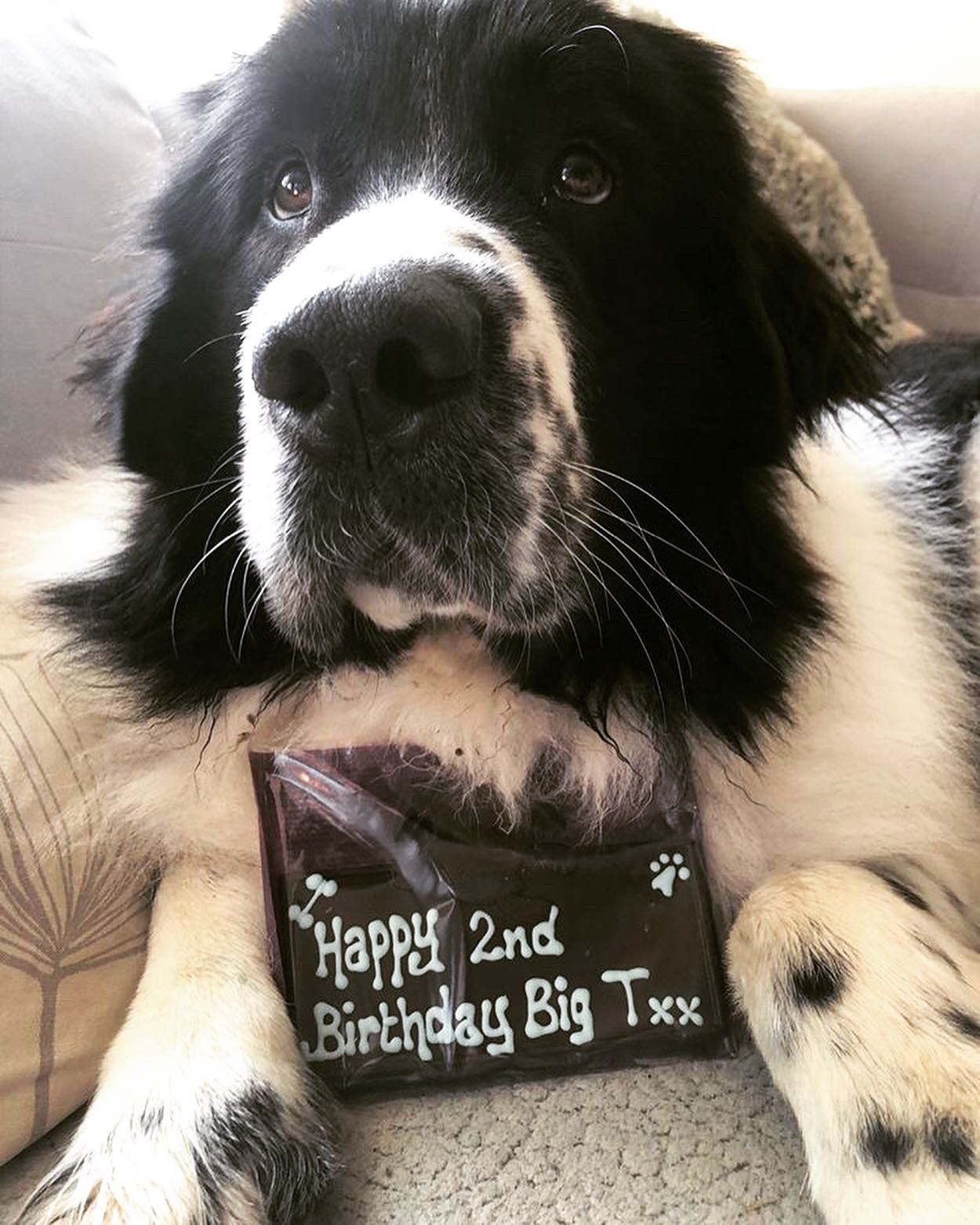 Big T turns two!