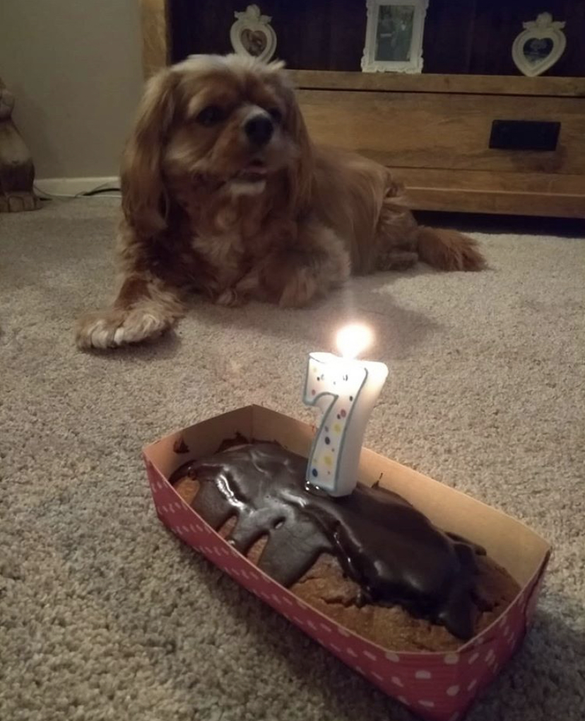 7th Birthday Bake Off!