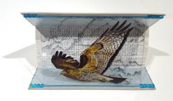 Animal Tales - Flight of the Intruder  -