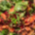 Beetroot & Chard Salad.jpeg