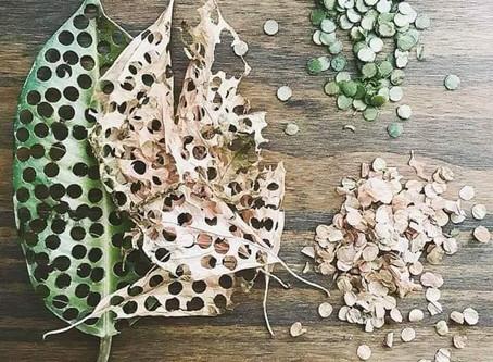 Fallen leaf confetti
