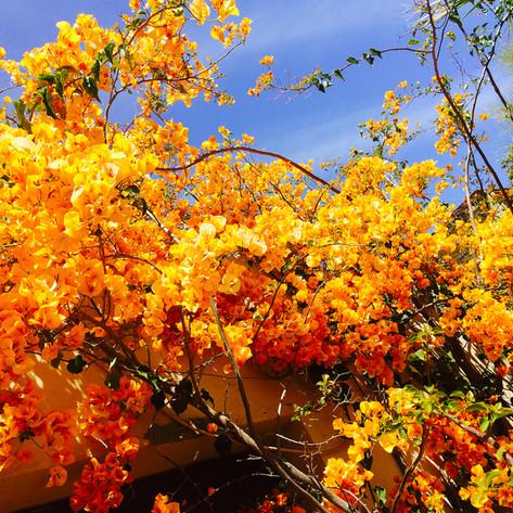 Beautiful flora and fauna