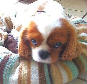 Dog sitting Westerham