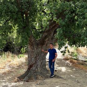 Cork tree Montemayor
