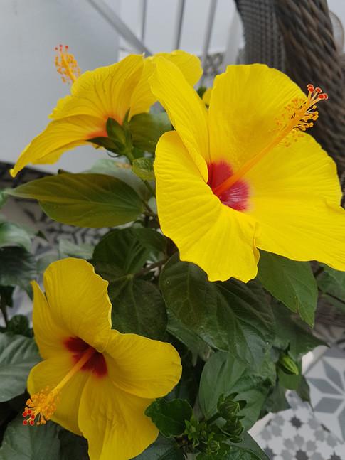 Yellow flower 2.jpg