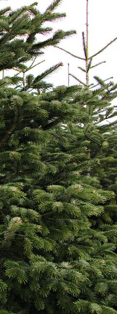 12.02.16 042 [www.imagesplitter.net]-0-3.jpeg