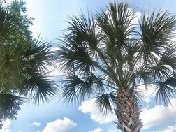 And more palm trees. Because palm trees