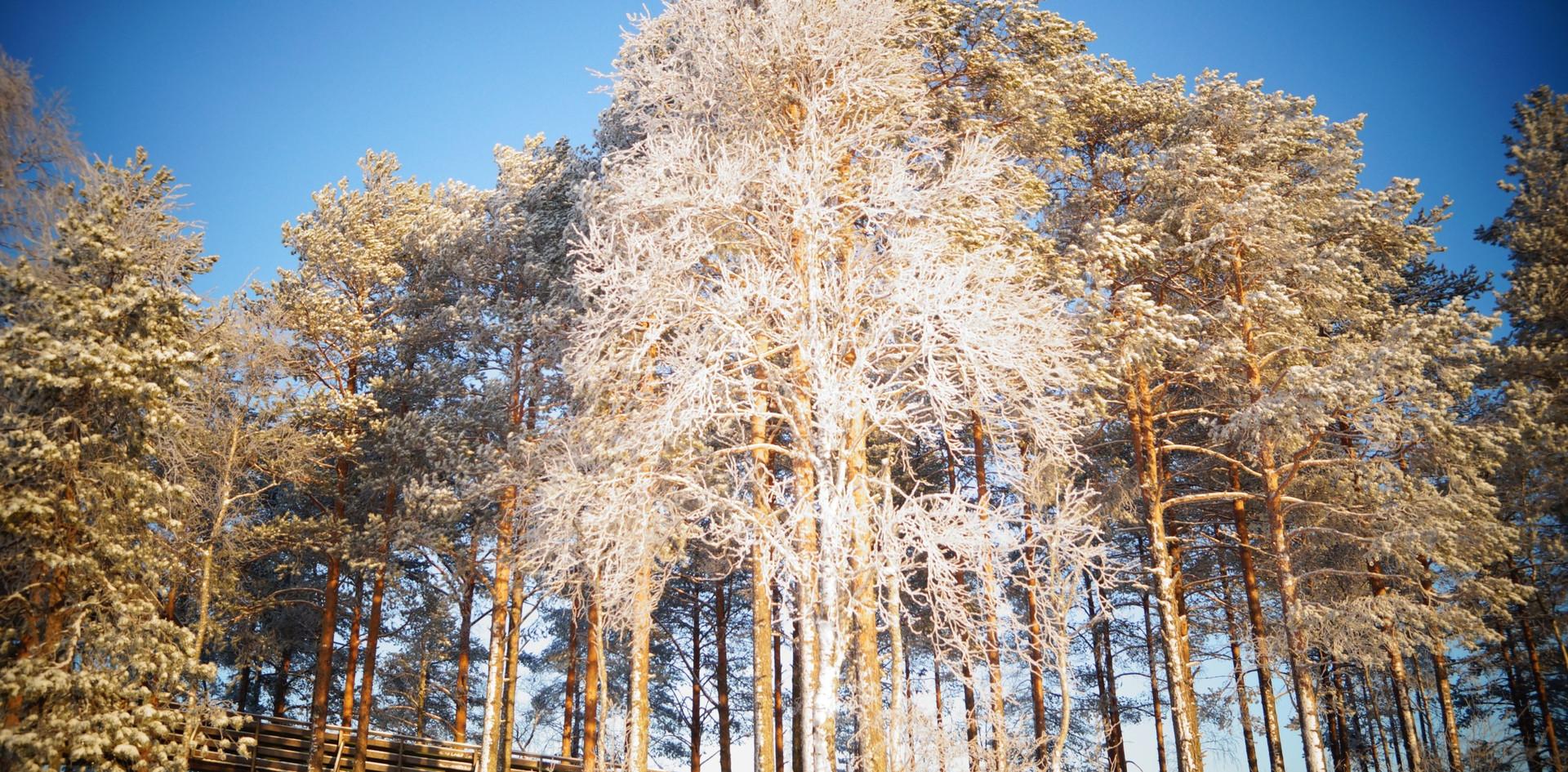 Вышка в деревьях