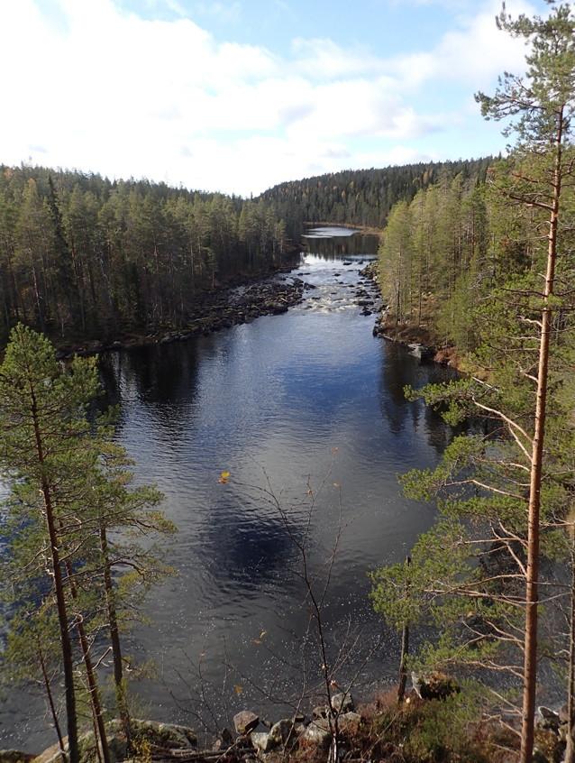 В сказочном лесу 6