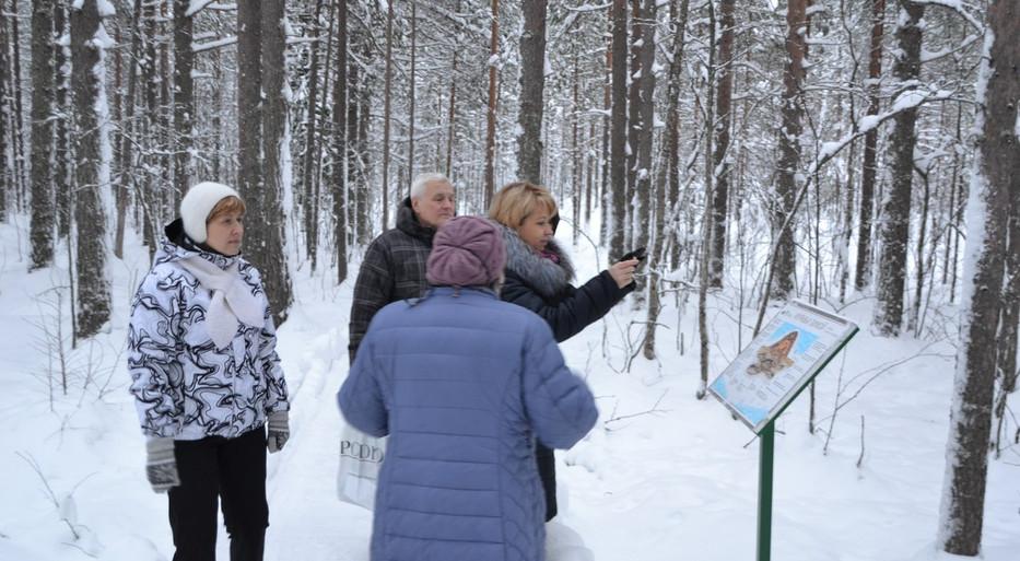 Зимние посетители