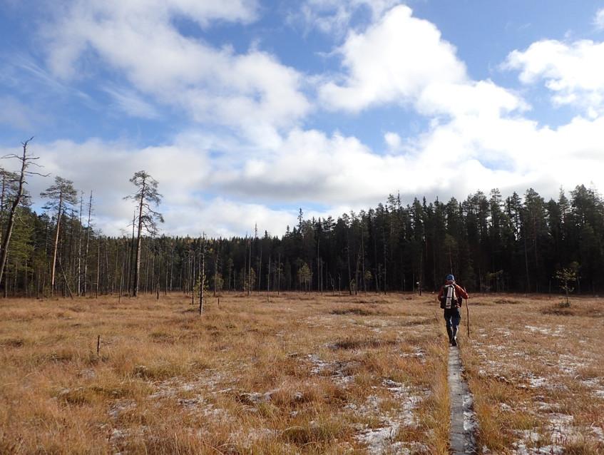 В сказочном лесу 4