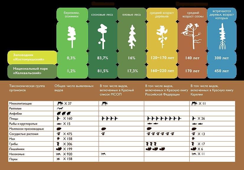Биоразнообразие.png
