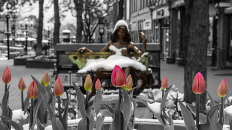 Pearl St Tulips with Statue_wm_web.jpg