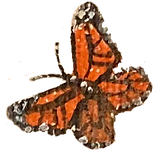 Butterfly1.png