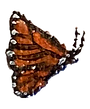 Butterfly3.png