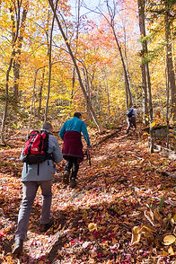 Fall Hiking Nature.jpg