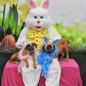 Bunny Pics @ Pet Valu