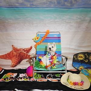 Life's A Beach @ Bag of Bones Barkery