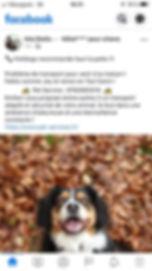 temoignages pet-services20191202.jpg