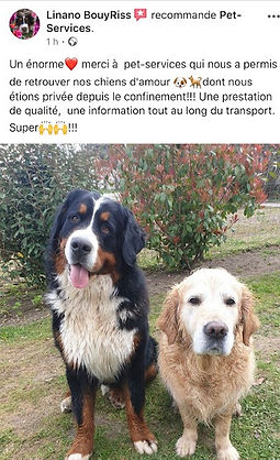 Pet_services_transport_aninaux_octobre20