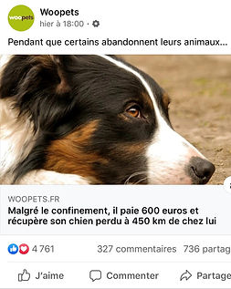 Pet_services_pomelo_woopets_mars2020.jpg