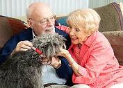 pet-services personnes dépendante 4.jpg