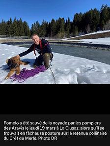 Pet_services_pomelo_dauphine_5.jpg