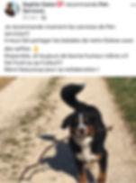 temoignages pet-services20191201.jpg