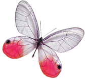 GLASSWINGBUTTERFLY%201_edited.png
