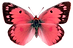 CORAL%20BUTTERFLY%20C_edited.png