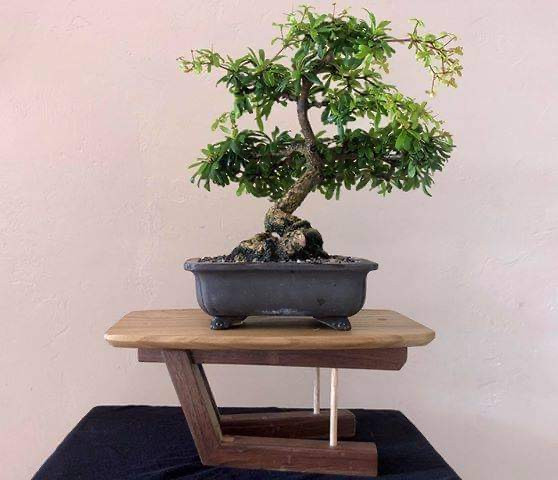 Bonsai Stand
