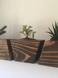 Triangle Succulent Holders