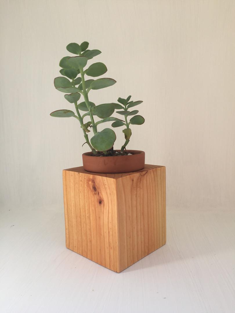 Cube Succulent Holder
