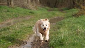 Attention aux chiens qui courent librement!