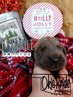 Kringle 1 week