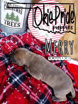 Merry 1 week
