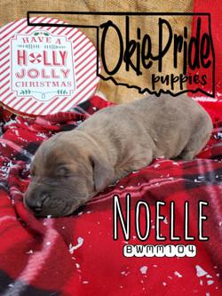 Noelle 1 week