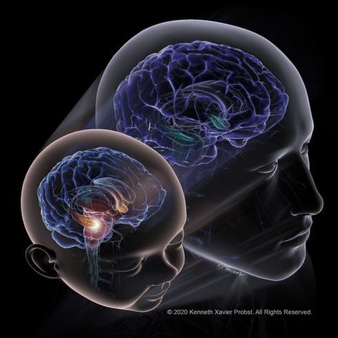 Early Decline in Hippocampal Neurogenesis