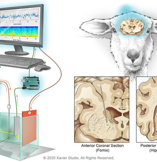 In-Vitro Test Environment for DBS Sytems
