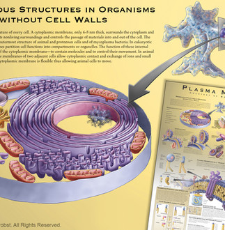 Membranous Structures of Organisms without Cell Walls