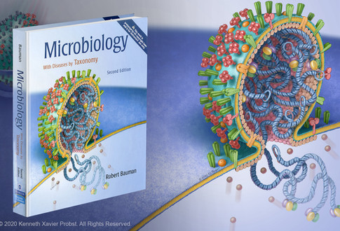 Microbiology: with disease by taxonomy, 2e