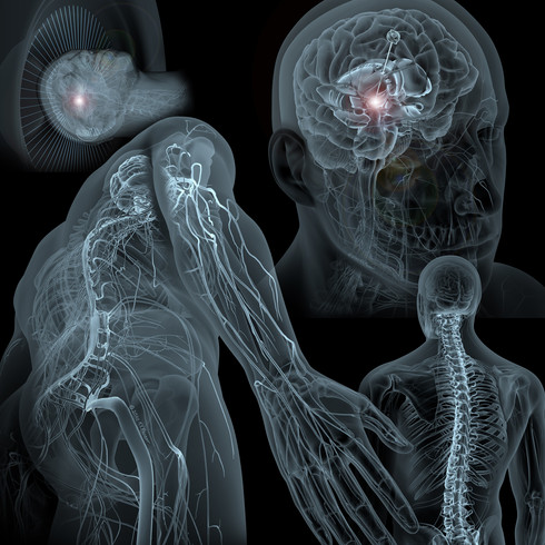 Neurosurgical Services