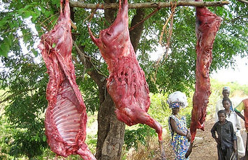 Bush meat blog 1.jpg